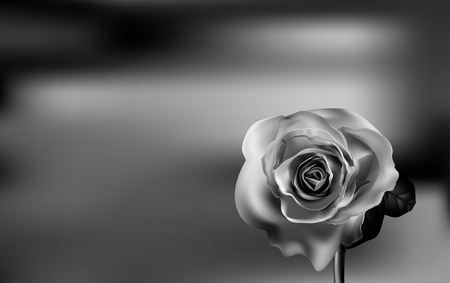 red rose black background: Delicate Black and white Rose on a blurred green background. Valentines day. Illustration