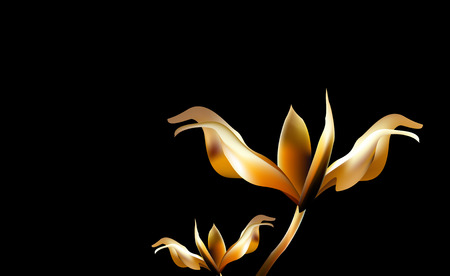 lilium: Precious Golden flower in the hour of dawn. Lily Lilium  and fragile at Golden hours. Illustration