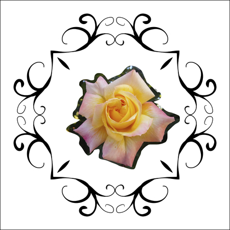 Floral frame retro lovely rose in decorative frame in a vintage style