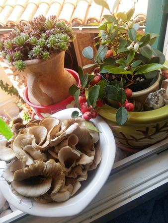 Wild mushrooms on the windowsill of the farmhouse. Mushrooms and wild berries. Still life. Stock Photo