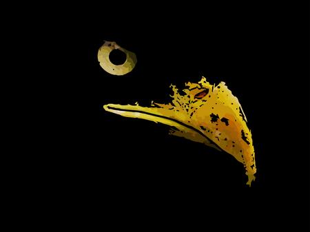 Il predatore malvagio è l'aquila un simbolo americano su sfondo nero. Vettoriali