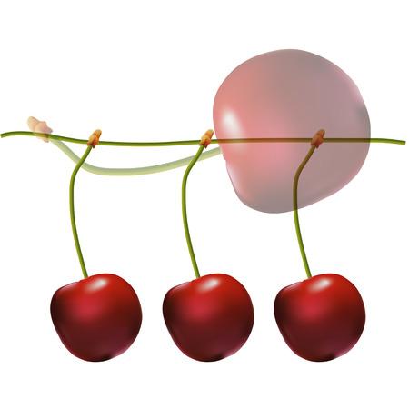 Red juicy cherries on the stem. Delicious fruit dessert. Cherry closeup. Ilustração