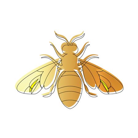 Golden honey bee uterus of summer day on white background. Banco de Imagens - 103792537