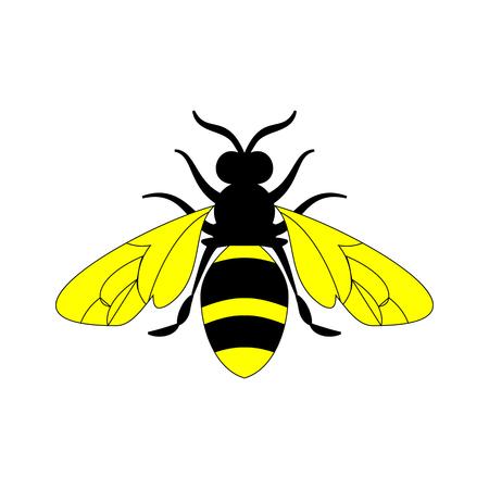 Golden honey bee uterus of summer day on white background.