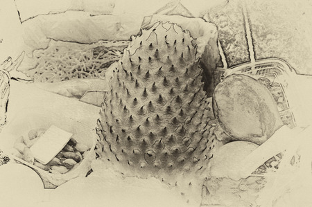 Vintage illustration of the exotic fruit Guanabana on the market table. Drawing on old paper.