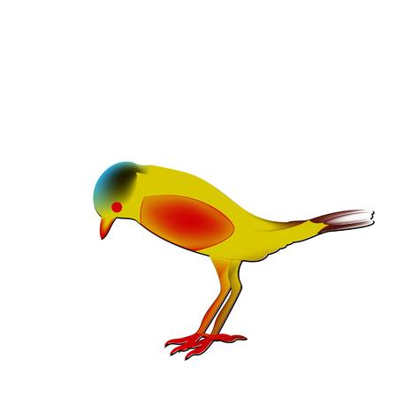 rare passerine bird, Saxicola insignis with a red abdomen. Иллюстрация