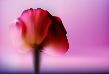 Precious red flower Tulip on a blurred gold background romantic Valentines day. Romantic and gentle abstract background. Ilustração