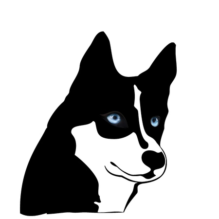 Silhouette cartoonist big black and white dog. The dog Northern with blue eyes.