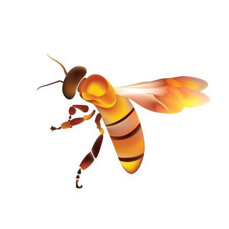 Golden honey bee uterus of summer day on white