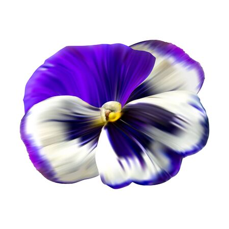 Colorful flower background with pansies flowers. Winter natural flower Wallpaper.