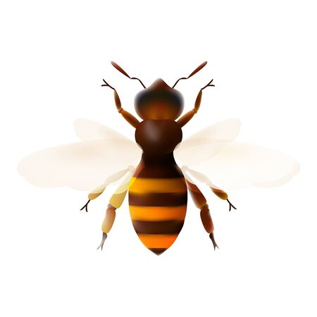 Honey bee. Striped orange bee illustration mesh. Insect symbol for natural, healthy and organic food production