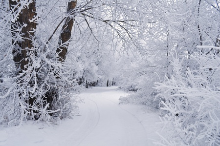 Winter background with trees in the snow and the road photo