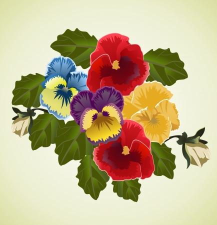 pansies: Bunch of pansies