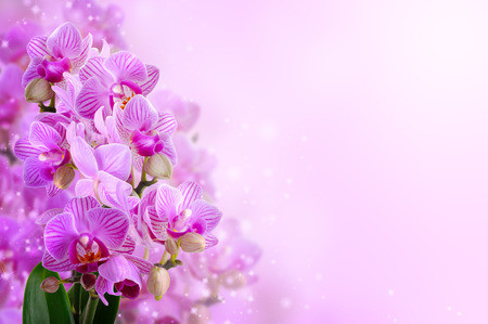 shiny background: bouquet of orchids on the shiny background