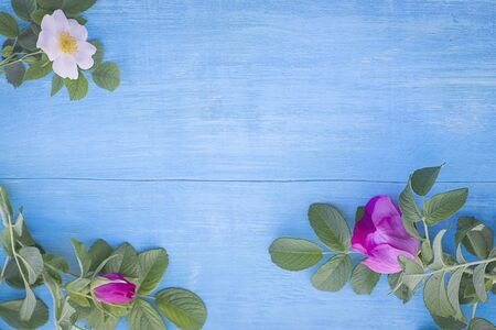 Pastel shades. Sprigs of blooming rose hips with pink and white flowers on a wooden blue background Stock fotó