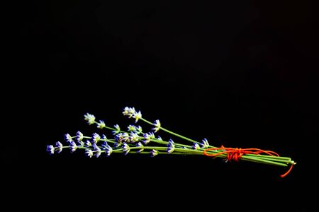 Lavender flowers tied a bouquet of red threads on a black background. Selective focus. Copy space.