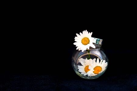 Chamomile flowers in a glass jar on a black background. Selective focus. Copy space.