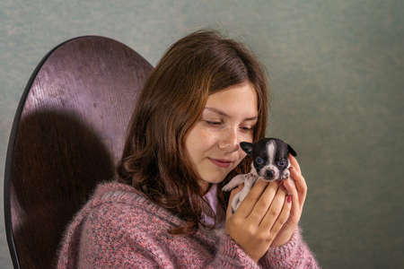 A young girl sits, holding a little puppy Chihuahua Stock fotó