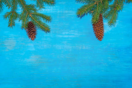 On top of the branches were spruce with cones. The blue background. Horizontal position