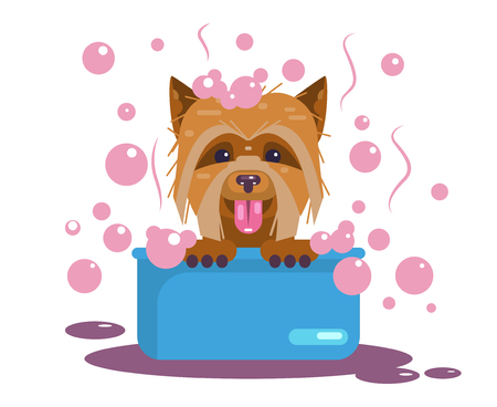 Dogs grooming. Puppy wash. Funny muzzle
