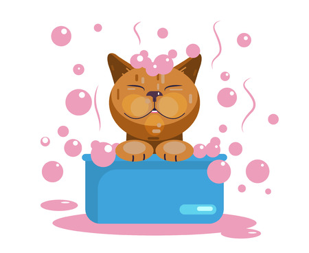 Cat grooming. Cat wash. Funny muzzle