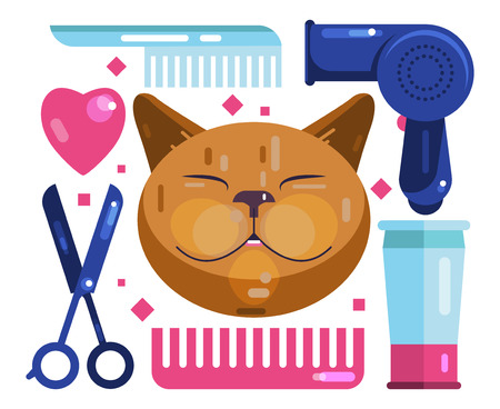 Cat grooming. Blow-Dry, Cut and Comb