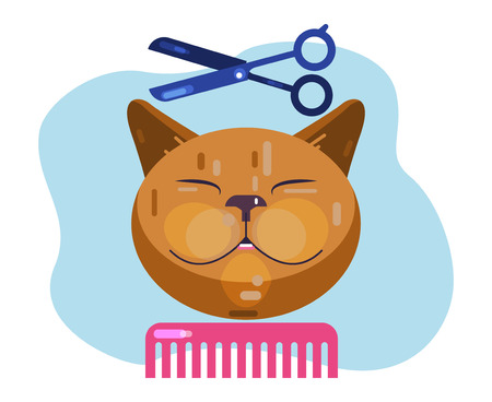 Cat grooming. Haircut cat. Salon for animals