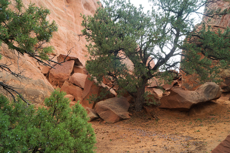 national scenic trail: A scenic trail to Sand Dune Arch in The Arches National park.