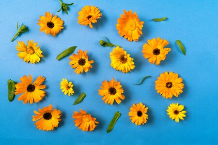 Floral pattern with yellow flowers isolated on blue background. Flat lay. Copy space.