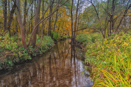 Golden autumn in the forest, small river, Yellow and red trees in one clear day.
