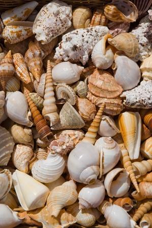Basket with seashells for sale.