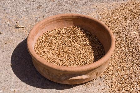 Ancient ceramic dish with grain .