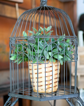 Potted plant grows in a birdcage .