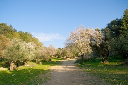 Gravel rural road in park .Spring. Israel.