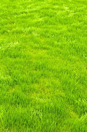 Neuer Frühling grünes Gras für Design. Standard-Bild - 9563811