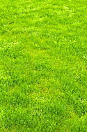 New spring green grass for design . Stock Photo