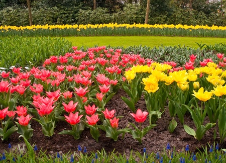 Pretty manicured flower garden with colorful flowers.