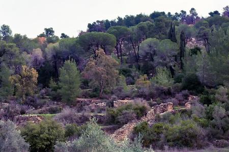 judean hills: Piedmont Ora in the Judean Hills, on the western slopes of Jerusalem.  Israel.