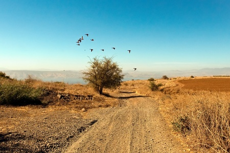 Sea of Galilee .Landscape Of North Galilee In Early winter . Migratory birds. Israel. Stock Photo - 10390839