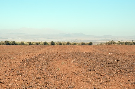 Agriculture fields . Landscape Of North Galilee In Early winter, Israel. Stock Photo - 10390817