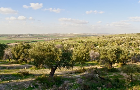 paisaje mediterraneo: Paisaje rural Israel en el d�a de la primavera.