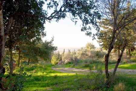 Rural israel landscape at the spring day . photo