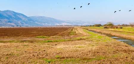 bird of israel: Valley Agmon-Khula and adjacent to the ridges and the Golan mountains of Naftali. Winter. Israel. Stock Photo