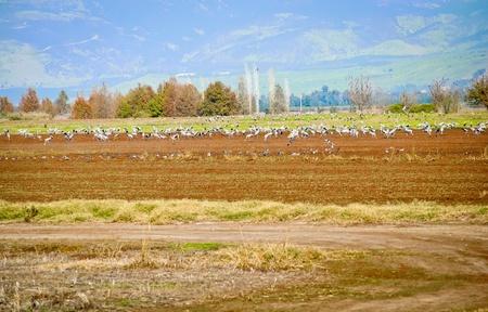vogelspuren: Tal