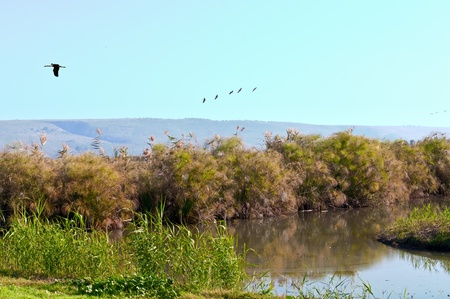 bird of israel: Valley  Stock Photo