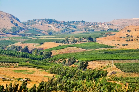 galilee: View of the Golan in the summer . North Israel.