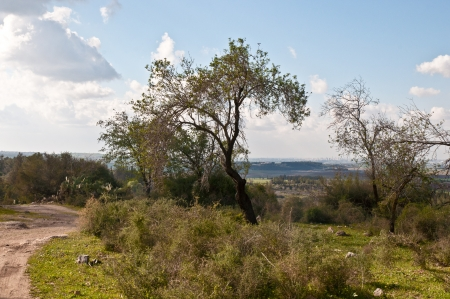 Spring landscape with trees  Israel