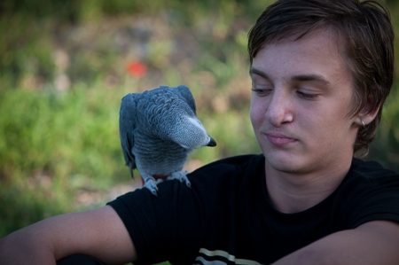 grays: Portrait of a teenage boy with a gray parrot African grays Jaco.