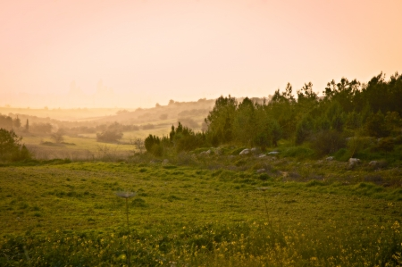 Frühling in Israel Wald nahe Jerusalem Standard-Bild - 18532330