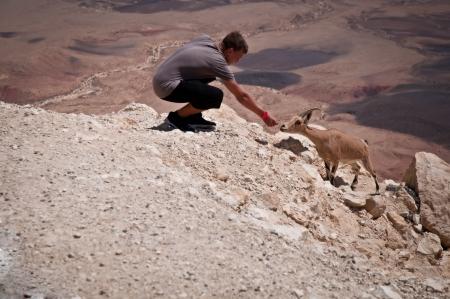negev: Mountain goat in the Negev desert  Israel